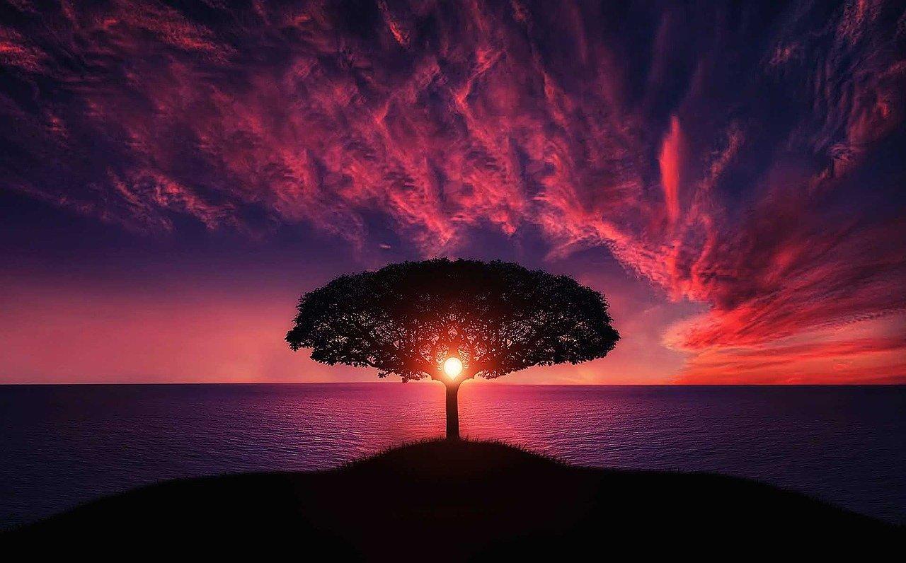 parole parole parole parole (in realtà l'immagine rappresenta un albero con sullo sfondo il mare e un tramonto rosso rosso rosso